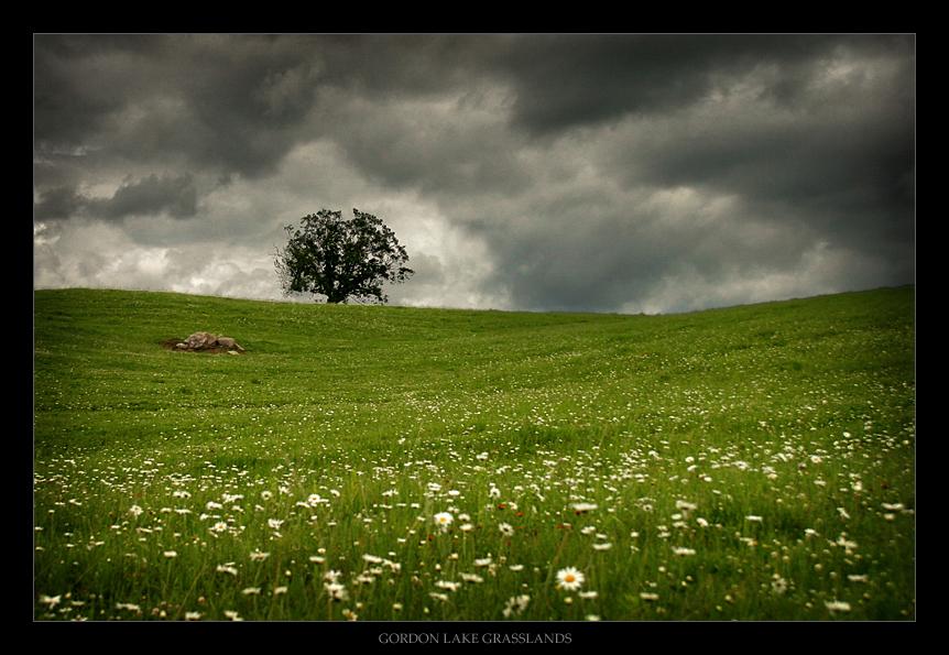 gordonlakegrasslandsbytfavretto.jpg